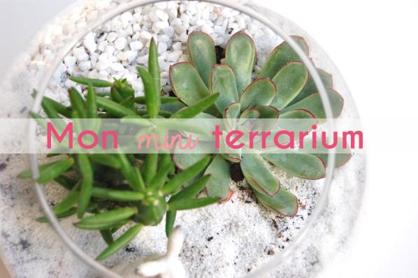 DIY:Terrarium:Succulentes