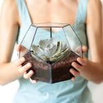 Terrarium en verre sur Etsy