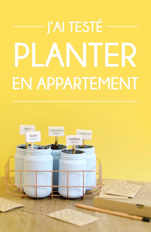 Comment Planter Les Graines De Persil la box à planter : j'ai testé le jardinage en appartement