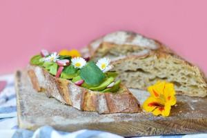 Avocado toast : tartine avec le pain de Cucugnan