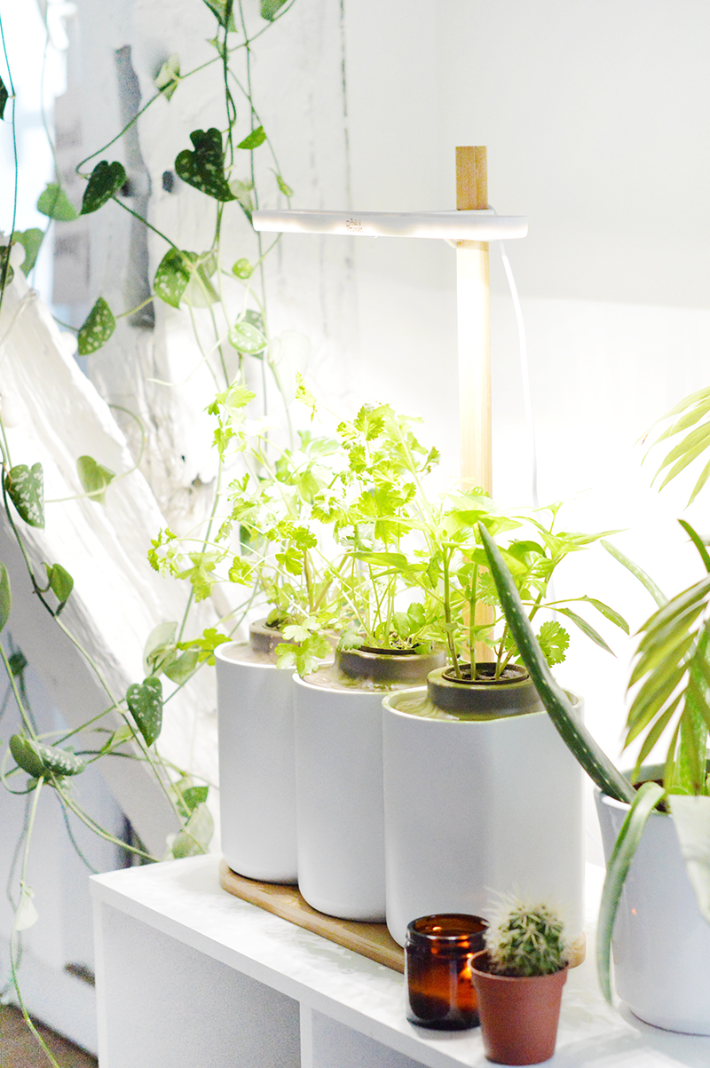 J Ai Teste Planter Mon Mini Jardin D Interieur Avec Lilo De Pret A