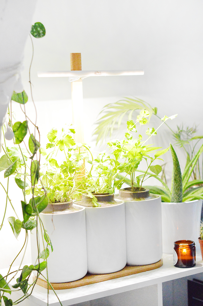 En automne et en hiver à Paris, c'est bien difficile pour moi de faire pousser mes aromates dans les jardinières accrochées à mes fenêtres : gros manque de lumière, températures probablement trop froides … C'est pourquoi j'ai décidé d'adopter le Lilo de Prêt-à-Pousser !