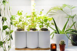 J'ai testé : planter mon mini jardin d'intérieur avec Lilo de Prêt-à-Pousser