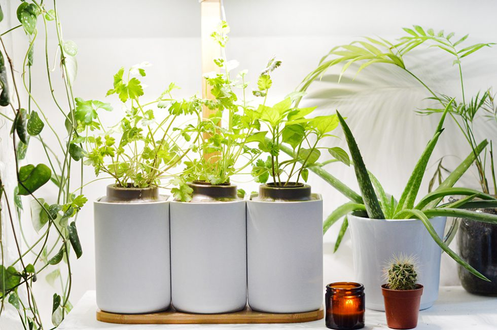 J Ai Teste Planter Mon Mini Jardin D Interieur Avec Lilo